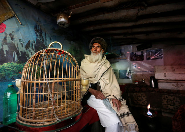 Mohammad Jan, 67, sits beside a cage of partridges in a shop at Ka Faroshi bird market in Kabul, Afghanistan, January 18, 2018. (Photo by Mohammad Ismail/Reuters)