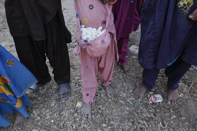 A girl holds cotton blooms in her shirt knotted as a bag while standing with others along a street in Meeran Pur village, north of Karachi November 23, 2014. (Photo by Akhtar Soomro/Reuters)