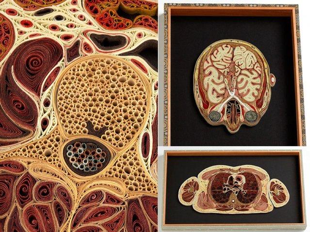Paper Anatomy By Lisa Nilsson
