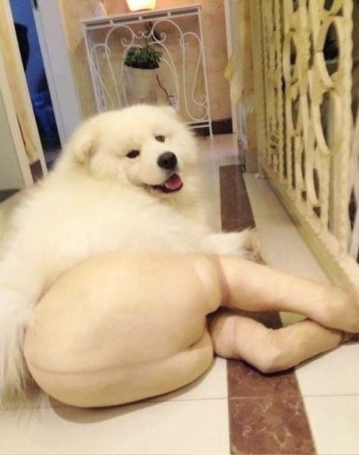 Dogs Wearing Pantyhose, A Popular New Meme in China
