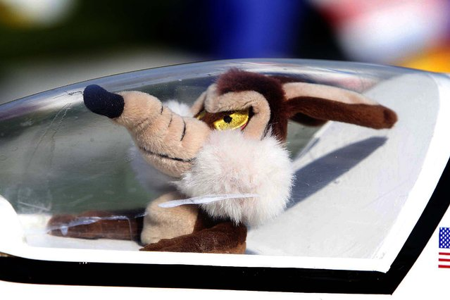 Wile E. Coyote is in the cockpit of an 80 inch Ultra Sport remote control plane. (Photo by Bill Ingram/The Palm Beach Post)