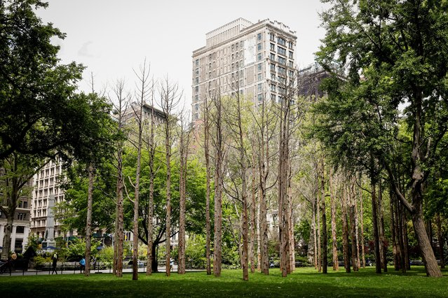 """""""Ghost Forest"""" an art installation designed by artist Maya Lin is seen in Madison Square Park in the Manhattan borough of New York City, New York, U.S., May 10, 2021. (Photo by Brendan McDermid/Reuters)"""
