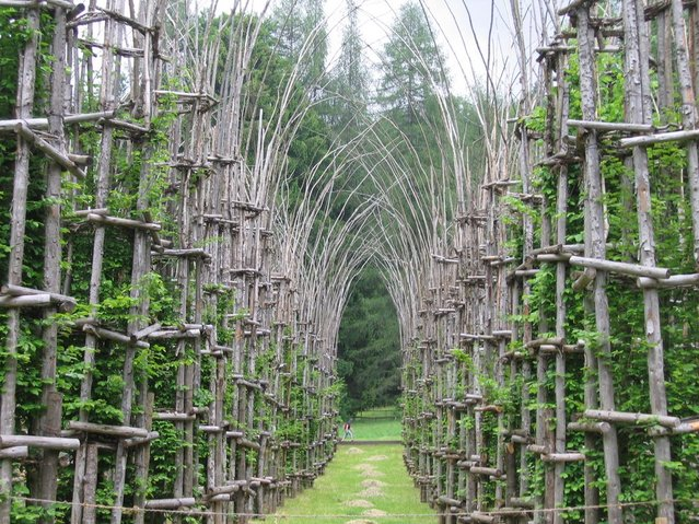 Cathedral Made From Trees By Giuliano Mauri