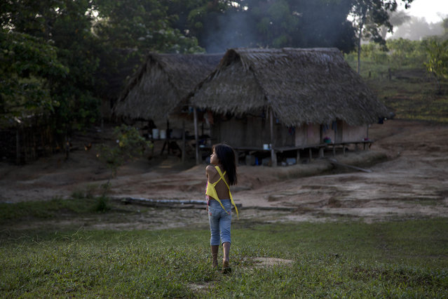 In this March 16, 2015 photo, an Ashaninka Indian girl walks to her home in the hamlet of Saweto, Peru. Illegal logging persists unabated in this remote Amazon community where four indigenous leaders who resisted it were slain in September. Since then, several dozen people have moved away out of fear, some to Pucallpa, others to a sister Ashaninka village across the border in Brazil. (Photo by Martin Mejia/AP Photo)