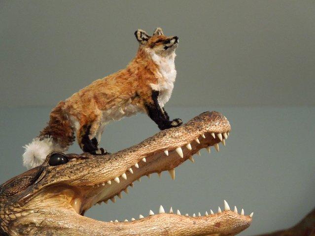 Red Fox. (Photo by Lauren Ryan)