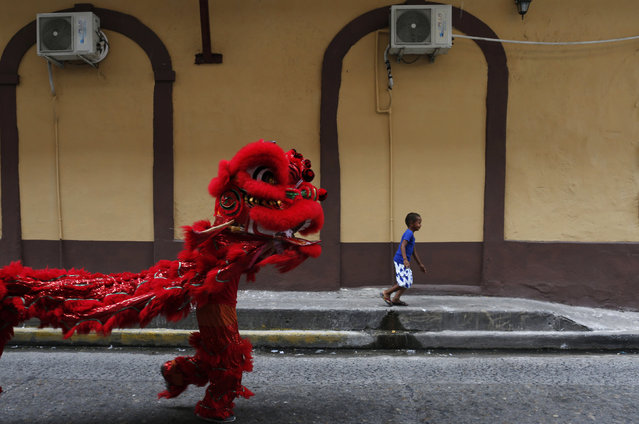 A boy runs as dancers perform a lion dance during celebrations of the Chinese Lunar New Year of the Monkey in Chinatown in Panama City, Panama, February 8, 2016. (Photo by Carlos Jasso/Reuters)