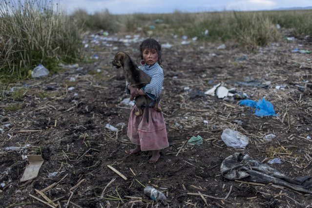 In this February 4, 2017 photo, Melinda Quispe walks on the trash strewn shore of Lake Titicaca, as she holds her dog, in her village Kapi Cruz Grande, in the Puno region of Peru. The governments of Peru and Bolivia signed a pact in January to spend more than $500 million to attack the pollution problem of Lake Titicaca, though the details were vague. (Photo by Rodrigo Abd/AP Photo)