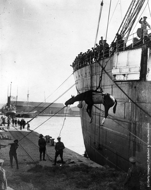 1915:  British troops landing horses from a ship at Salonika to move to the Balkan battle front