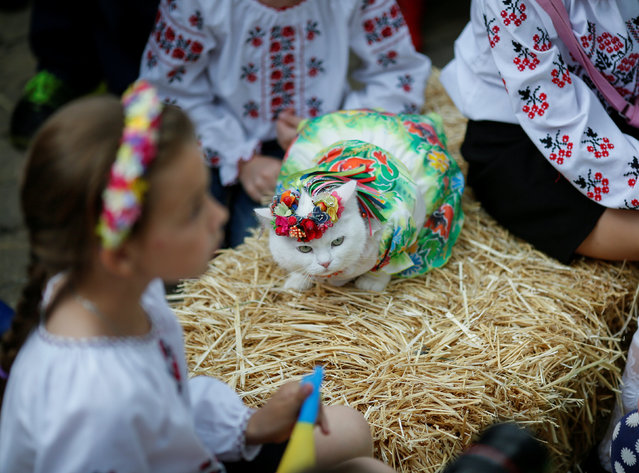 A cat dressed in a traditional Ukrainian embroidered shirt takes part in a parade in Kiev, Ukraine on May 28, 2016. (Photo by Gleb Garanich/Reuters)