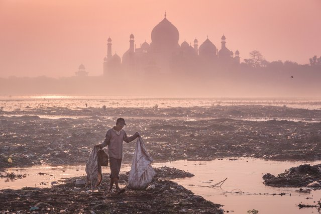 Behind the Taj Mahal, India, by Mustafa AbdulHadi. The early morning silhouette of Taj forms a backdrop to a garbage-strewn bank of the Yamuna river in Agra where a man scans the rubbish for valuables. (Photo by Mustafa AbdulHadi/2016 Atkins CIWEM Environmental Photographer of the Year)