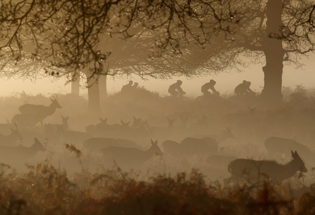 Deer are seen grazing as cyclists ride past in the early morning mist in Richmond Park, west London, Britain, December 30, 2019. (Photo by Toby Melville/Reuters)