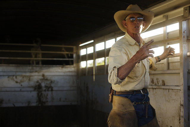 Cowboy David Thompson gestures as he loads his horse into a trailer near Ignacio, Colorado June 12, 2014. The land where the cattle graze is leased from the Forest Service by third-generation rancher Steve Pargin. Several times a year, he and a crew led by his head cowboy, David Thompson, spend a week or more herding cattle from mountain range to mountain range to prevent them from causing damage to fragile ecosystems by staying in a single area too long. (Photo by Lucas Jackson/Reuters)