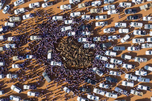 Cars and people surround camels for sale during the annual King Abdulaziz Camel Festival in Rumah, some 160 kilometres east of Riyadh, on January 7, 2020. (Photo by Faisal Al-Nasser/AFP Photo)