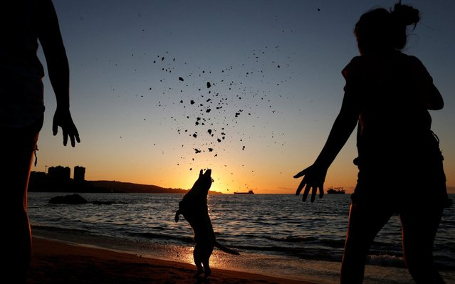A girl plays with a dog at the beach before night-time curfew announced by the government to keep people off the streets to prevent infections amid the coronavirus disease (COVID-19) outbreak, in Vina del Mar, Chile on March 22, 2020. (Photo by Rodrigo Garrido/Reuters)