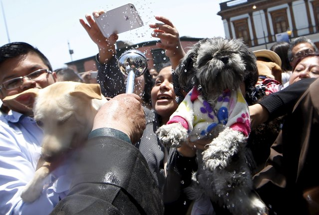 Owners hold their pets as a Catholic priest blesses them outside the San Francisco church in Lima, October 4, 2015. (Photo by Mariana Bazo/Reuters)