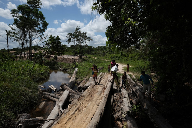 Loggers have been stealing hardwood trees from indigenous lands in Alto Turiacu Reserve, Maranhão, Brazil on August 13, 2015. (Photo by Bonnie Jo Mount/The Washington Post)