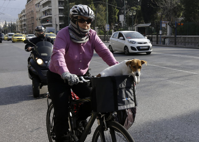 A dog sits in the basket of a cyclist in Athens on Wednesday, January 21, 2015. Greek voters go to the polls Sunday as the popular left-wing Syriza party is poised to defeat conservative Prime Minister Antonis Samaras according the last opinion polls. (Photo by Thanassis Stavrakis/AP Photo)