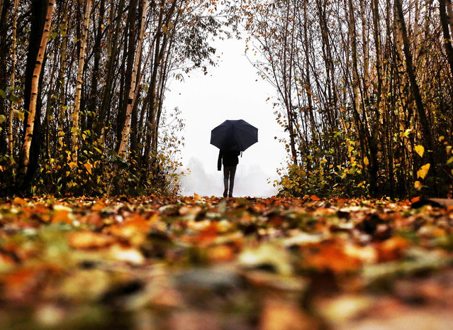 A man walks out of a leaf lined forest as it rains in Frankfurt, Germany, on a dark and grey Tuesday, November 15, 2016. (Photo by Michael Probst/AP Photo)