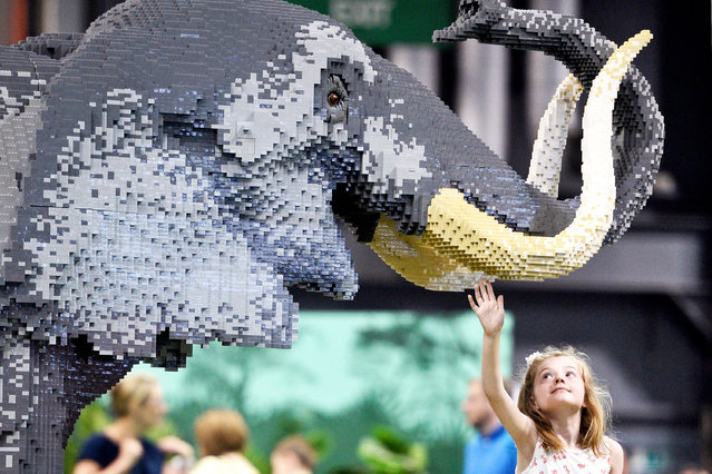 Kezia McNeill, 6, with Earl Grey the Elephant which took 1,600 hours to make and used 270,000 bricks at Glasgow SEC on July 19, 2018. The UK's largest Lego exposition arrives in Scotland. (Photo by South West News Service)