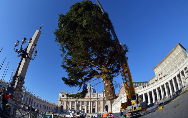 A crane sets the traditional Christmas tree on St Peter's square on December 5, 2013 at the Vatican. The tree, that was cut in Regensburg, Germany, is 25 metres tall, weights 7,2 tons and is 45-year-old. (Photo by Gabriel Bouys/AFP Photo)