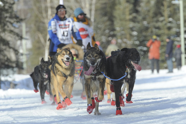 Iditarod musher Mishi Konno runs his team along the trail during the ceremonial start of the Iditarod Trail Sled Dog Race, Saturday, March 2, 2019 in Anchorage, Alaska. (Photo by Michael Dinneen/AP Photo)