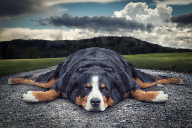 """Lazy dog"". (John Wilhelm)"
