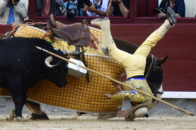 A picador falls from his horse during a bullfight at the Las Ventas bullring during the 2019 San Isidro festival in Madrid on May 15, 2019. (Photo by Gabriel Bouys/AFP Photo)