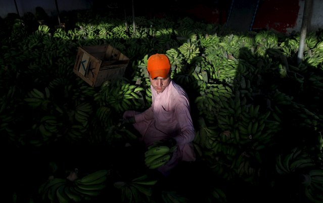 A laborer sorts bananas at a wholesale fruit and vegetable market on the outskirts of Karachi April 22, 2015. (Photo by Athar Hussain/Reuters)