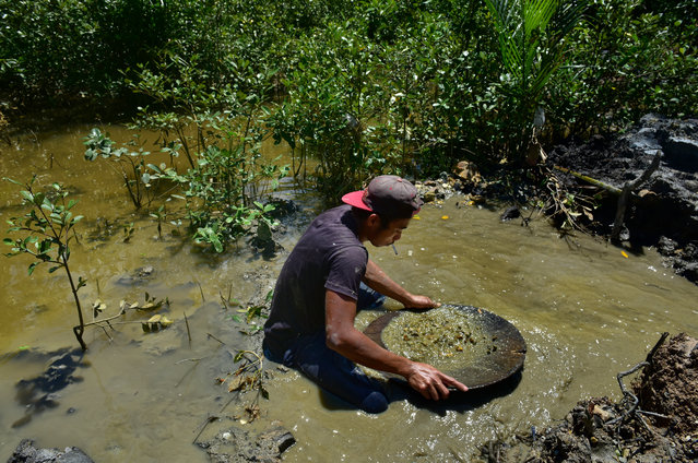 A local small scale miner panning mud to extract minute particles of gold in a pan on March 22, 2017 in Paracale, Philippines. (Photo by Jes Aznar/Getty Images)