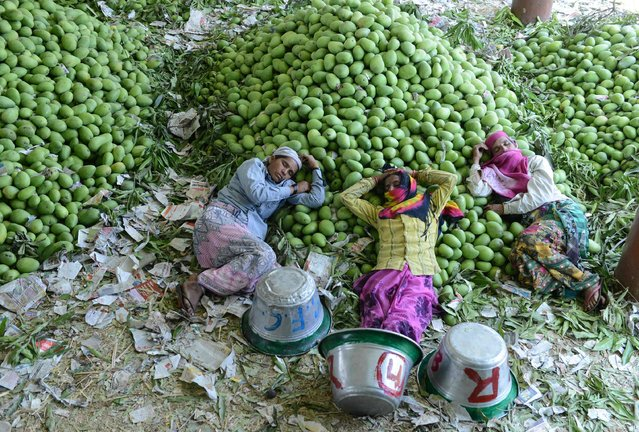 Indian workers rest after unloading mangoes at the Gaddiannaram Fruit Market on the outskirts of Hyderabad on April 12, 2017. India produces over 40 per cent of the world's mangoes, growing some 30 varieties commercially. (Photo by Noah Seelam/AFP Photo)