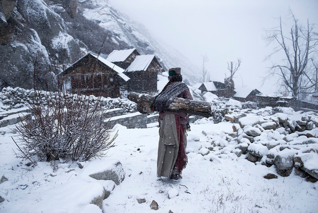 Third place, people: Remote life at –21℉. Kinnaura tribal old women in remote village in Himachal Pradesh carrying a big log back home to warm up her house. (Photo by Mattia Passarini/National Geographic Travel Photographer of the Year Contest)