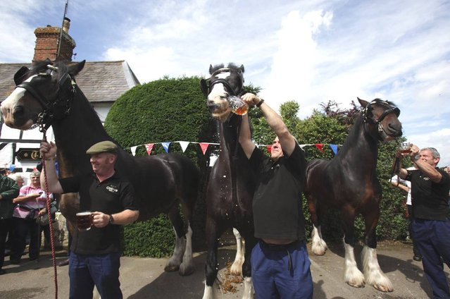Monty, (C) the Wadworth brewery shire horse gets given a pint of beer outside the Raven Inn in Poulshot as he starts his two-week annual holiday on August 3, 2012 near Devizes, England. (Photo by Matt Cardy)