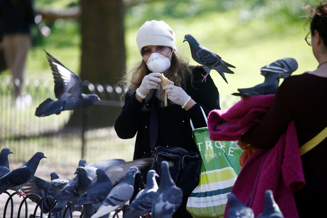 A lady wearing a mask feeds pigeons in St James' Park, as the spread of the coronavirus disease (COVID-19) continues, London, Britain, April 5, 2020. (Photo by Henry Nicholls/Reuters)