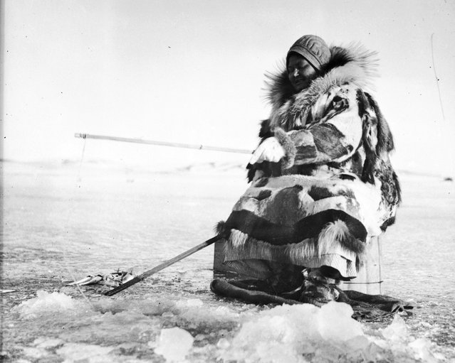 A Sami woman wearing a thick fur coat fishes through a hole on an icy expanse in Alaska, circa 1950. (Photo by Evans/Three Lions)