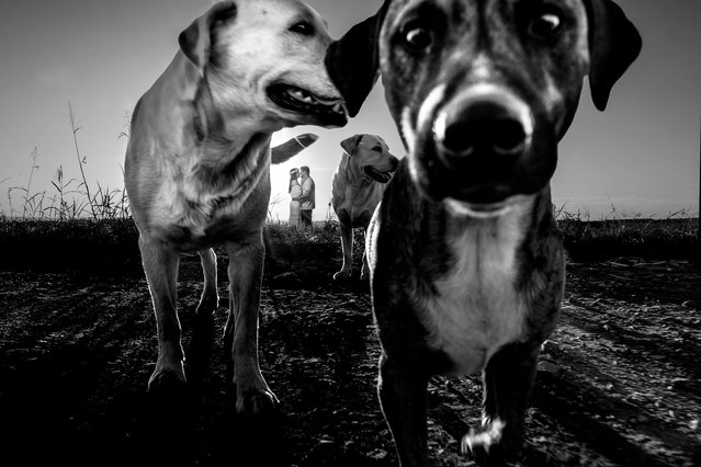 These dogs pull focus from the Bride and Groom. (Photo by Daniel Ribeiro/Caters News Agency)