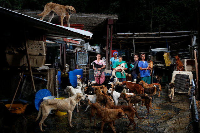 (L-R) Maria Silva, Milena Cortes, Maria Arteaga, Jackeline Bastidas and Gissy Abello pose for a picture at the Famproa dogs shelter where they work, in Los Teques, Venezuela, August 25, 2016. Venezuelans struggling to feed their families let alone their pets are dumping animals on the streets, in parks and at makeshift homes overrun with scrawny animals amid an economic crisis. An hour from Caracas in Los Teques, hundreds of dogs bark and run around the streets scavenging for food outside a makeshift shelter. People come by every few hours to hand over scrawny dogs which are fed by volunteers every day. Venezuela is undergoing a major economic and social crisis, with shortages of basic foods and medicines. Triple digit inflation is hitting everybody hard, including those who own pets. (Photo by Carlos Garcia Rawlins/Reuters)