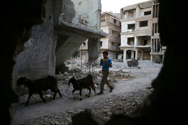 A boy herds goats near damaged buildings in the rebel-held besieged town of Zamalka, in the Damascus suburbs, Syria October 3, 2016. (Photo by Bassam Khabieh/Reuters)