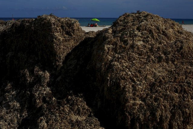 Tourists sit on a beach near Sargassum algae in Cancun, August 11, 2015. The Sargassum algae contains biting sand fleas and releases a pungent smell as it decomposes. It has choked beaches in resorts throughout the Caribbean including Cancun this season, prompting local authorities to launch a large-scale clean-up operation. (Photo by Edgard Garrido/Reuters)