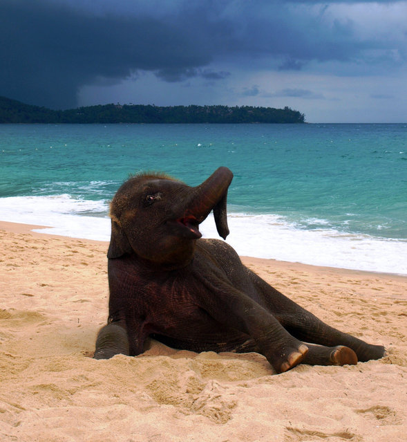 Baby Elephant On A Beach
