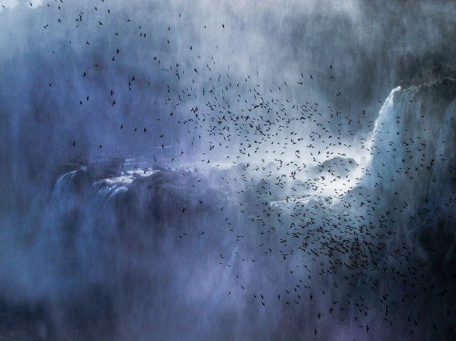 """Swifts over the fall"". This picture was taken at the majestic Iguazú Falls. The flight of these flock of swifts across the huge waterfalls portrait the sense of freedom and wildness that belongs to this fantastic world wonder. Location: Puerto Iguazú, Misiones, Argentina. (Photo and caption by Filippo Pellegrini/National Geographic Traveler Photo Contest)"