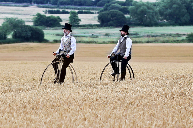 """Alistair Cope and son Sebastian make the point that there are not many places you can't cycle your penny farthing including along the """"tram lines"""" of a field of wheat. After gaining the farmers full permission to """"Give it a go"""" the pair made for a very unusual sight as a pair of penny farthings emerged cautiously through the cerial crop, probably even historically the first time in a wheat field. All this at Kilmington in East Devon, UK on July 18, 2018. Alistair is the founder of the cycle organisation Velo Vintage and their moto is """"Time to cycle, take tea, converse and dress with style"""". (Photo by South West News Service)"""