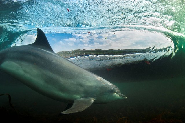 """Undated handout photo issued by the British Wildlife Photography Awards of """"In the Living Room"""" by George Karbus, winner of the British Wildlife Photographer category in the British Wildlife Photography Awards 2013. (Photo by George Karbus/BWPA/PA Wire)"""