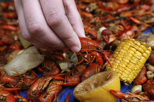A reveller grabs a crawfish during a Mardi Gras parade in New Orleans, Louisiana February 15, 2015. (Photo by Jonathan Bachman/Reuters)