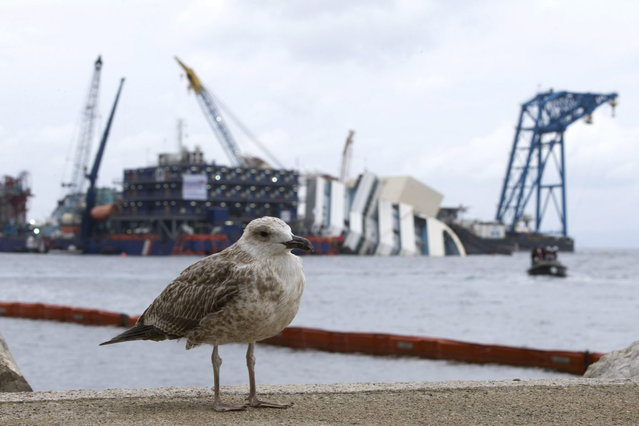 "A bird stands in front of the Costa Concordia ship as it lies on its side on the Tuscan Island of Giglio, Italy, Sunday, September 15, 2013. Authorities have given the final go-ahead for a daring attempt Monday to pull upright the crippled Costa Concordia cruise liner from its side in the waters off Tuscany, a make-or-break engineering feat that has never before been tried in such conditions. The ship capsized there 20 months ago, and Italy's national Civil Protection agency waited until sea and weather conditions were forecast for dawn Monday before giving the OK to try to right it. In a statement Sunday, the Civil Protection agency said the sea and wind conditions ""fall within the range of operating feasibility"". (Photo by Andrew Medichini/AP Photo)"