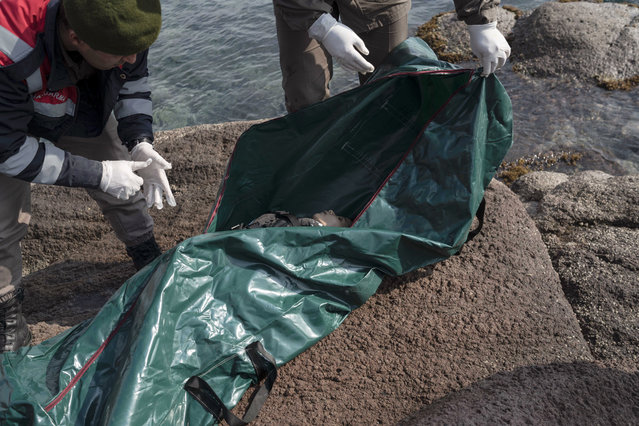 Turkish paramilitary police officers collect the dead body of a migrant child from the shoreline near the Aegean town of Ayvacik, Canakkale, Turkey, Saturday, January 30, 2016. (Photo by Halit Onur Sandal/AP Photo)