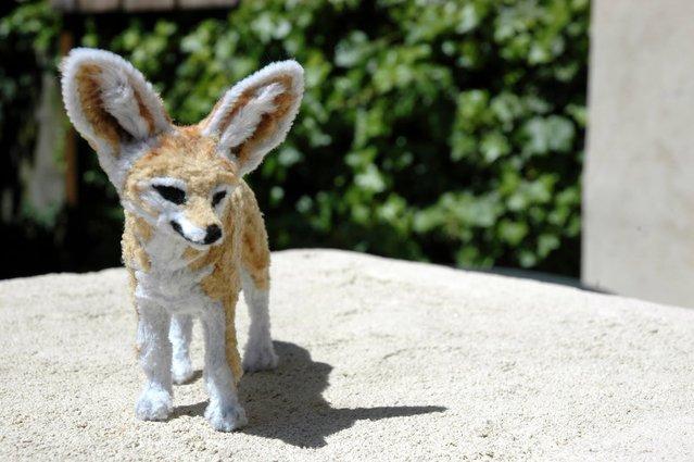 Fennec Fox. (Photo by Lauren Ryan)