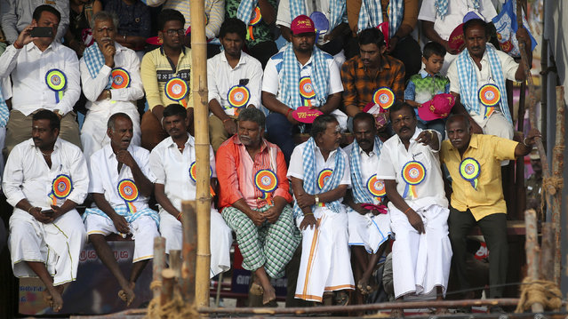 In this Wednesday, January 16, 2019, photo, members of Jallikattu organizing committee attend traditional bull-taming festival called Jallikattu, in the village of Palamedu, near Madurai, Tamil Nadu state, India. (Photo by Aijaz Rahi/AP Photo)