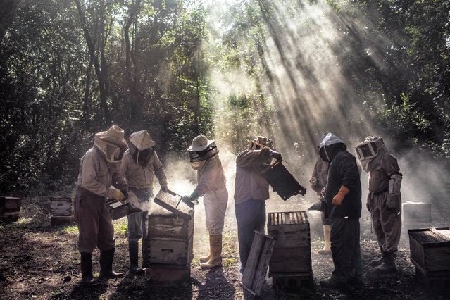 Environment story nominee: God's honey, by Nadia Shira Cohen. A group of beekeepers tending to their hives in Tinun, Mexico. Mennonite farmers growing soy in Campeche, in the Yucatán Peninsula, are allegedly adversely affecting the livelihood of local Mayan beekeepers. Environmental groups and honey producers say the introduction of GM soy and use of the agrochemicals endangers health, contaminates crops, and reduces the market value of honey by threatening its organic label. (Photo by Nadia Shira Cohen/World Press Photo 2019)