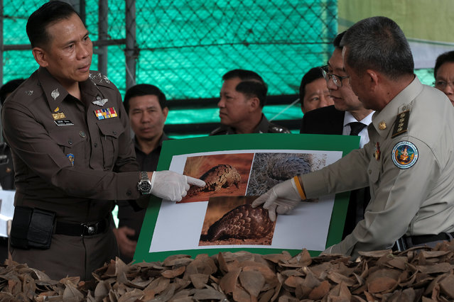 Police and government officers hold up pictures of pangolins during a news conference at the customs department in Bangkok, Thailand, February 2, 2017. Thai customs officials have seized 2.9 tons of pangolin scales worth 29 million Thai baht ($826,000) that were smuggled into Thailand from Congo and destined for Laos, authorities said on Thursday. (Photo by Athit Perawongmetha/Reuters)