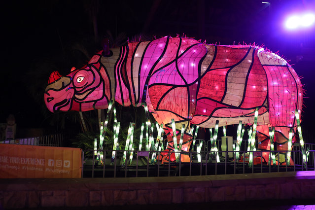 An illuminated lantern sculpture of a sumatran rhino during the media preview of Vivid Sydney at Taronga Zoo on May 19, 2019 in Sydney, Australia. (Photo by Richard Milnes/Rex Features/Shutterstock)